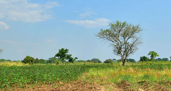 TANZANIA – Kikonge